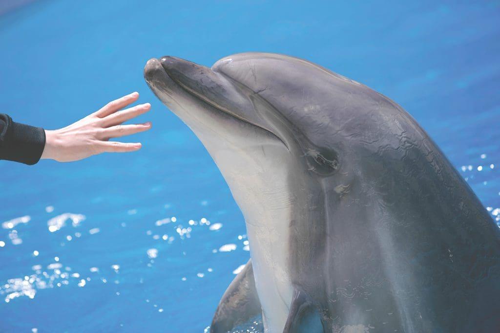 Dolphin Mattress