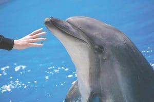 Dolphin Matress